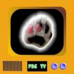 logo pdg 004c